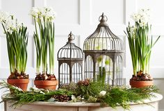The Winter Garden: Bring the Outdoors In