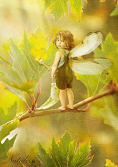 Yellow Leaf painter Fairy