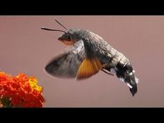 STRANGE BIRD BUG Sven Kirston just saw one in his kitchen window, in GERMANY. wow