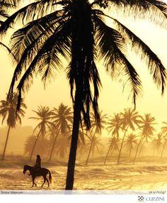 87 Best Horseback Riding Images Horseback Riding