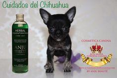 cosmetica para cuidado del chihuahua