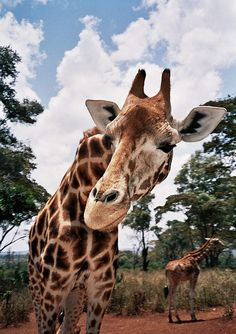 Hello Mr. Giraffe