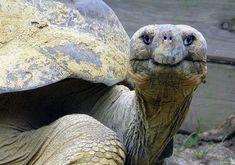 """""""Honored to be here."""" 