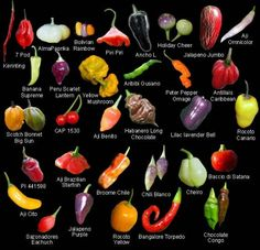 Vargas Pepper Fact: Amongst edible varieties, there are 5 great families of peppers. The most common are Capsicum annuum, the family which includes. Worlds Hottest Pepper, Hottest Chili Pepper, Pepper Benefits, Chile Picante, Types Of Peppers, Chilli Plant, Ghost Peppers, Pepper Seeds, Food Charts