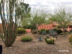 RAMBLINGS FROM A DESERT GARDEN....: Great Landscape Design: Drought Tolerant and Beautiful!