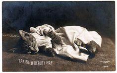 "Vintage CAT Postcard 1906 RPPC Kitten Rotograph Real Photo Postcard ""Taking A Beauty Nap""Darling Innocent Kitten Sleeping In Dress Nightgown"
