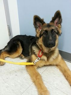 Kayla at the vets 5 months old