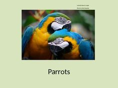 This+product+is+a+Power+Point+presentation+on+Parrots.+It+includes+a+Power+Point+show+and+two+worksheets.+One+worksheet+is+multiple+choice+and+T/F+questions.+The+other+is+a+coloring+page+for+students+to+make+their+own+colorful+parrots.Thank+you!+