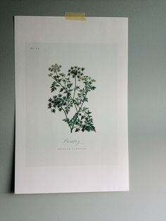 Free Botanical Art Prints for Your Walls | Apartment Therapy