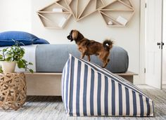 Annie's Guide to Choosing Pet-Friendly Décor. Think it's not possible to have high-end style with pet-friendly practicality? Think again: