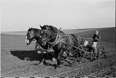 Corn planting (John Vachon: Jasper County, Iowa,1940 May)