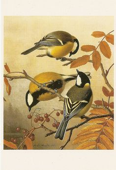 Ferdinand von Wright | von Paicil Great Tit, Vintage Birds, Ferdinand, Inktober, Painters, Rooster, Animals, Art, Animales