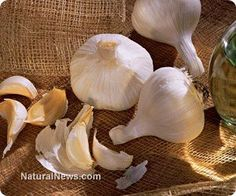 Do you know that garlic possesses potent, natural antibiotic and antimicrobial properties able to protect against plague. http://www.naturalnews.com/039755_garlic_bubonic_plague_antibiotics.html