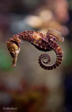neaq:  Visitor Pictures: Seahorse and spiral Photo: @dkathunt via Twitter