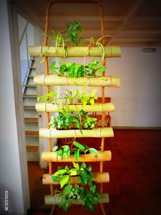 Bamboo Ladder : A wonderful way to partition an area with a green privacy screen.  Contact us on +91 888 455 5869 or xanaduorganicgardens@gmail.com