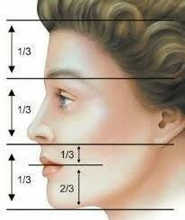 Step by Step drawing lessons Anatomy. Hacks and Tips – Schnitzerei Drawing Lessons, Drawing Techniques, Drawing Tips, Art Lessons, Drawing Drawing, Anatomy Drawing, Pencil Art Drawings, Art Sketches, Face Anatomy