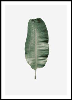 Banana leaf, posters in de groep Posters / Afmetingen / 21x30cm bij Desenio AB (8359)