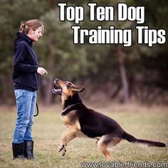 Top Ten Dog Training Tips. *Wish I could send this to my neighbor so he could train his dog.*