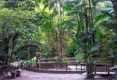 As belezas naturais do Bosque Rodrigues Alves. #Belém #Pará #Brasil