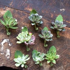 Boutonnières for today's wedding. #succulents #madewithlove #bringthepretty #nofilter #floralartistry
