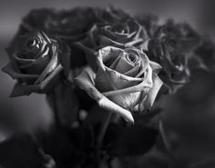 Roses,  Sinar Alpina 4x5 Kodak TMax 100