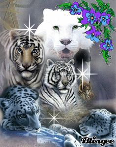 Awesome i love big cats Tiger Images, Tiger Pictures, Images Gif, Animal Pictures, Beautiful Cats, Animals Beautiful, Cute Animals, Big Cats Art, Cat Art