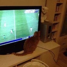 Soccer Kitten commits 10 fouls in 2 seconds.