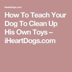 How To Teach Your Dog To Clean Up His Own Toys – iHeartDogs.com