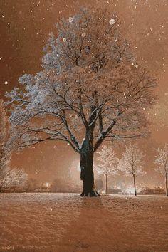 Beautiful tree in winter