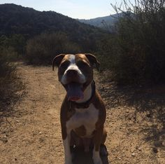 Enjoying the trails at Franklin Canyon Park - Beverly Hills, CA - Angus Off-Leash #dogs #puppies #cutedogs #dogparks #beverlyhills #california #angusoffleash