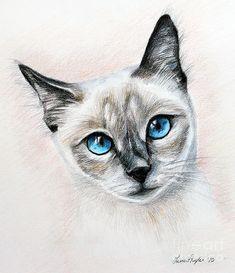 Blue Eyes Drawing  - Blue Eyes Fine Art Print