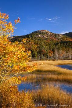 Autumn color at Upper Hadlock Pond, Acadia National Park, Maine, USA. © Brian Jannsen Photography