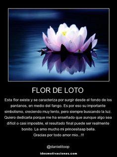 Imágenes de la flor de loto con frases | Descargar imágenes gratis Lily Pond, Inu, Multimedia, Tattos, Art Projects, Piercings, Wallpaper, Flowers, Ideas