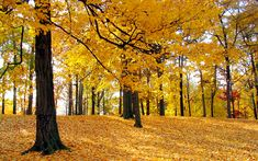 yellow | Full View and Download Trees(yellow) Wallpaper with resolution of ...