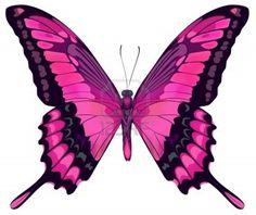 imagenes de mariposas - Buscar con Google
