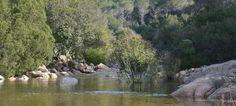 La Foresta di Pixina Manna Pula, Sardinia, Painting, Art, Art Background, Painting Art, Kunst, Paintings, Performing Arts