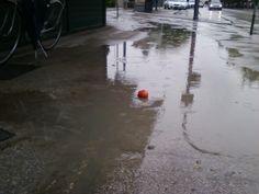 La solitudine dei pomodori in un giorno di pioggia qualunque