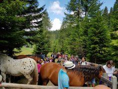 """Familienwanderung auf der Gerlitzen Alpe und mittendrin mal etwas andere """"Wanderer"""". Horses, Animals, Animales, Animaux, Animal, Animais, Horse"""