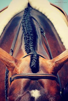 Hunter under saddle. My Horse, Horse Girl, Horse Love, All The Pretty Horses, Beautiful Horses, Animals Beautiful, Beautiful Braids, Pretty Braids, Tamara Lempicka