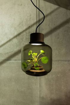 studio Mygdal, hand-blown glass container for home greenery growing, without the need for windows and sunlight