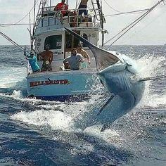 Fishing Yachts, Fishing Rigs, Sport Fishing, Bass Fishing, Ocean Fishing Boats, Deep Sea Fishing, Trophy Fish, Marlin Fishing, Salt Water Fish