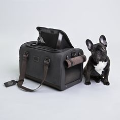 Cloud 7 for Tumi Pet Bag Cloud 7 for Tumi is a fine travel collection for man's… French Bulldog Clothes, French Bulldog Puppies, French Bulldogs, Dog Travel, Free Travel, Travel Bags, Pet Bag, Dog Branding, Pet Feeder