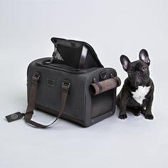 'Kiwi', the French Bulldog Puppy,  posing next to her favourite bag          http://cloud7.de