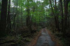 In Giappne c'è questa particolare e tristemente nota foresta detta dei suici, in giapponese Aokigahara, alle pendici del Monte Fuji, il più alto del Paese. Ha preso questo soprannome lugubre dopo che si sono verificati più di 50 suicidi in un solo anno anno nel 2010, nonostante i numerosi cartelli in giapponese e in inglese che provano a far desistere le persone.