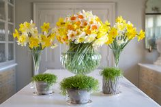 MSL: These amazing flower arrangements were created from daffodils picked yesterday at my farm. Picking this many barely made a dent in the flower border.