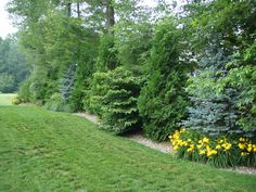 landscaping design providing planting privacy screen for front yard - Google Search
