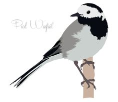 Pied Wagtail illustration by DKN Design