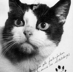 Félicitte Em 1963, o gatinho de rua de Paris se tornou o primeiro a ir ao espaço, através de uma iniciativa do governo francês. A ideia era estudar o comportamento do felino, que teve implantes cerebrais implantados para monitorar sua atividade neural. O foguete viajou mais de 150 km até o espaço e voltou em segurança, mas Félicitte foi sacrificado pouco depois para que os eletrodos em seu cérebro pudessem ser estudados.