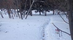 Птицы в парке Монумент Славы Новосибирск- зимой
