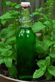 Homemade Creme de Menthe | neat ideas | Pinterest | Drinks Alcohol ...